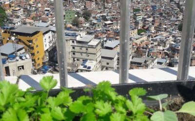 Jardineiro constrói hortas na Favela da Rocinha (RJ)